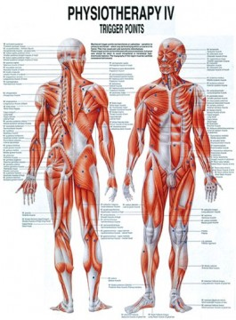 Physiotherapy lV: Trigger Points